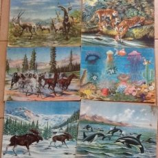 Libros antiguos: ANIMALES EN LA NATURALEZA, LOTE DE 6 NÚMEROS DE 8, FALTAN EL 2 Y EL 7. Lote 135230642