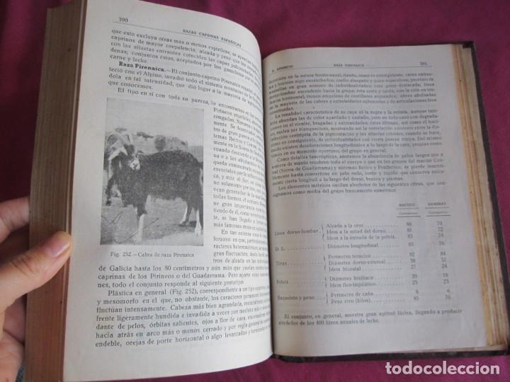 Libros antiguos: ZOOTECNIA ESPECIAL. ETNOLOGIA COMPENDIADA. GUMERSINDO APARICIO SANCHEZ - Foto 7 - 135309382