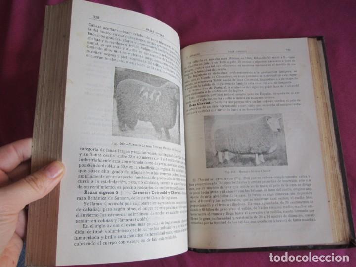 Libros antiguos: ZOOTECNIA ESPECIAL. ETNOLOGIA COMPENDIADA. GUMERSINDO APARICIO SANCHEZ - Foto 8 - 135309382