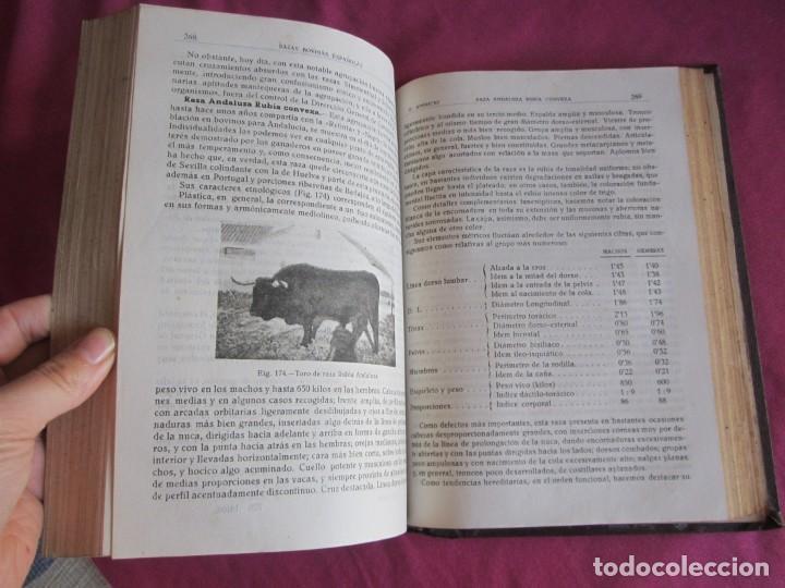 Libros antiguos: ZOOTECNIA ESPECIAL. ETNOLOGIA COMPENDIADA. GUMERSINDO APARICIO SANCHEZ - Foto 9 - 135309382