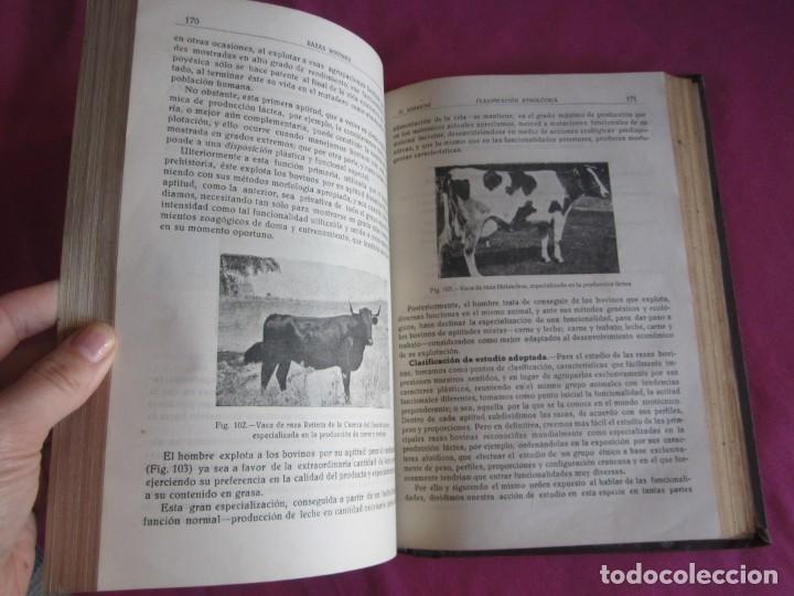 Libros antiguos: ZOOTECNIA ESPECIAL. ETNOLOGIA COMPENDIADA. GUMERSINDO APARICIO SANCHEZ - Foto 10 - 135309382