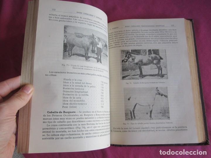 Libros antiguos: ZOOTECNIA ESPECIAL. ETNOLOGIA COMPENDIADA. GUMERSINDO APARICIO SANCHEZ - Foto 11 - 135309382