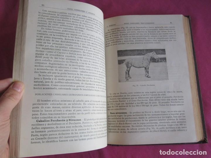 Libros antiguos: ZOOTECNIA ESPECIAL. ETNOLOGIA COMPENDIADA. GUMERSINDO APARICIO SANCHEZ - Foto 13 - 135309382