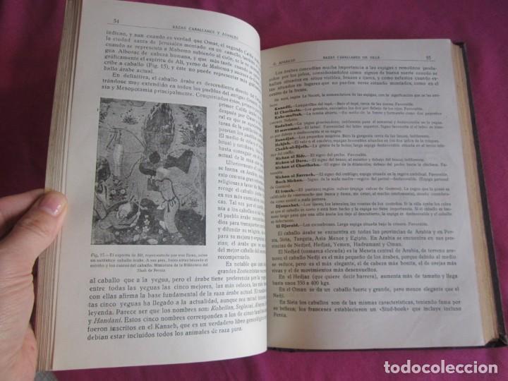 Libros antiguos: ZOOTECNIA ESPECIAL. ETNOLOGIA COMPENDIADA. GUMERSINDO APARICIO SANCHEZ - Foto 14 - 135309382