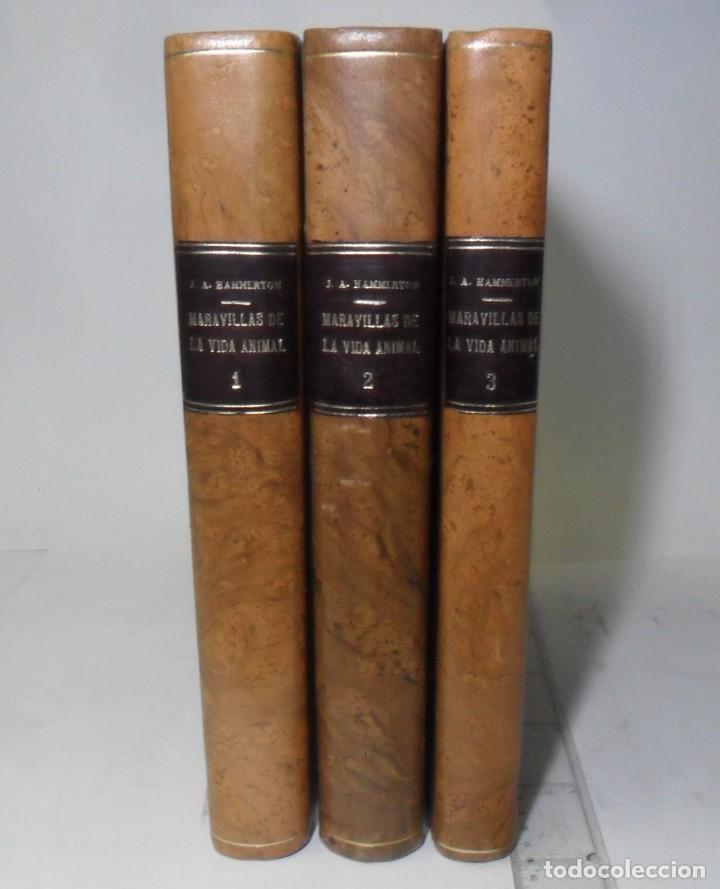 MARAVILLAS DE LA VIDA ANIMAL - 3 TOMOS - DIR: J. A. HAMMERTON - ED. JOAQUIN GIL - 1930 (Libros Antiguos, Raros y Curiosos - Ciencias, Manuales y Oficios - Bilogía y Botánica)