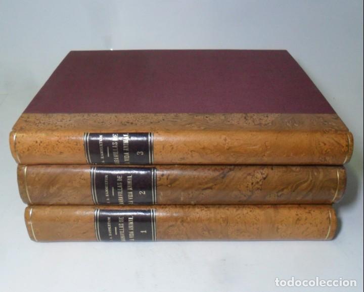 Libros antiguos: MARAVILLAS DE LA VIDA ANIMAL - 3 TOMOS - DIR: J. A. HAMMERTON - ED. JOAQUIN GIL - 1930 - Foto 2 - 137461910