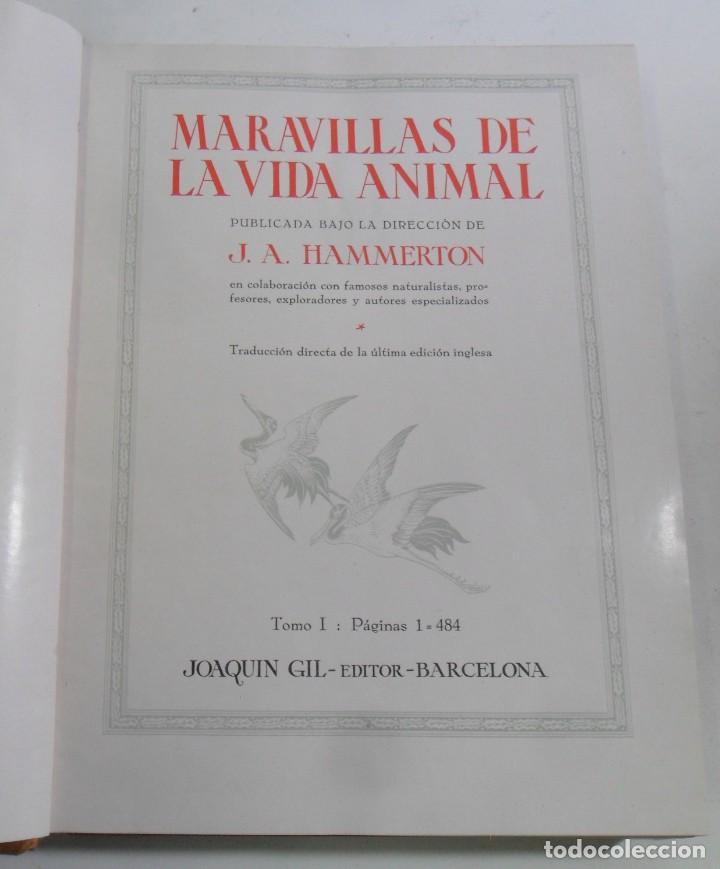 Libros antiguos: MARAVILLAS DE LA VIDA ANIMAL - 3 TOMOS - DIR: J. A. HAMMERTON - ED. JOAQUIN GIL - 1930 - Foto 4 - 137461910
