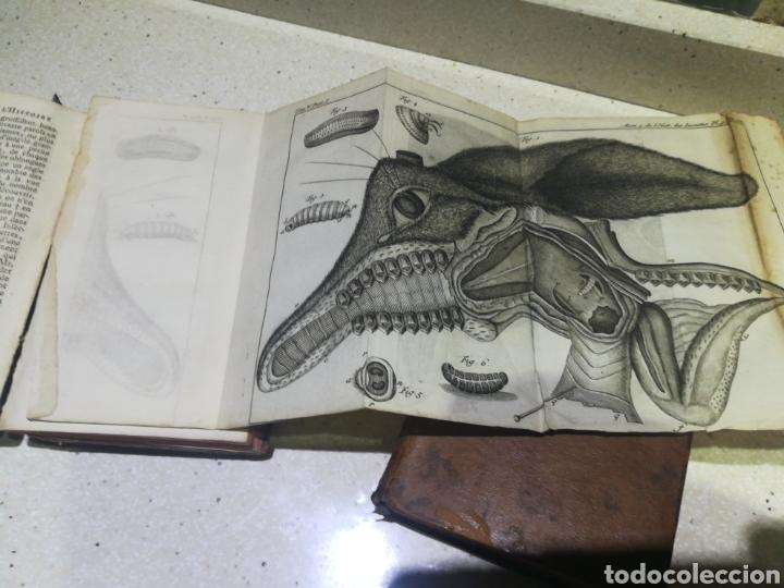Libros antiguos: Memoires pour servir a l,hitoire des insectes 1741 en 2 tomos - Foto 2 - 139903422