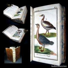 Libros antiguos: AÑO 1787 HISTORIA NATURAL 2 ESPECTACULARES GRABADOS COLOREADOS ZOOLOGÍA BUFFON PÁJAROS. Lote 110887311