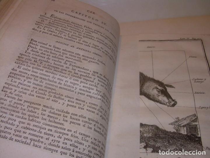 Libros antiguos: LIBRO TAPAS PIEL.DICCIONARIO DE AGRICULTURA,MEDICINA RURAL, VETERINARIA Y BOTANICA.AÑO 1799 - Foto 19 - 142796066