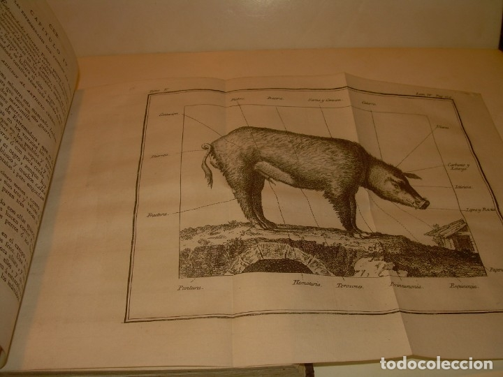 Libros antiguos: LIBRO TAPAS PIEL.DICCIONARIO DE AGRICULTURA,MEDICINA RURAL, VETERINARIA Y BOTANICA.AÑO 1799 - Foto 20 - 142796066