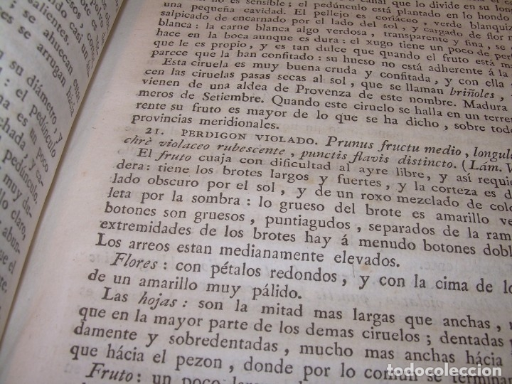 Libros antiguos: LIBRO TAPAS PIEL.DICCIONARIO DE AGRICULTURA,MEDICINA RURAL, VETERINARIA Y BOTANICA.AÑO 1799 - Foto 25 - 142796066