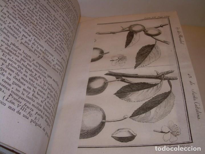 Libros antiguos: LIBRO TAPAS PIEL.DICCIONARIO DE AGRICULTURA,MEDICINA RURAL, VETERINARIA Y BOTANICA.AÑO 1799 - Foto 29 - 142796066