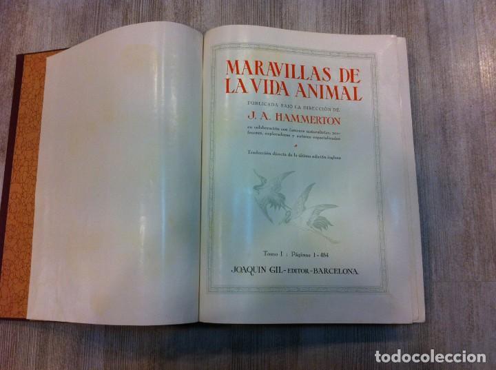 Libros antiguos: MARAVILLAS DE LA VIDA ANIMAL (4 TOMOS) J.A. HAMMERTON. Ed. JOAQUÍN GIL, 1930. BARCELONA. - Foto 3 - 142953930