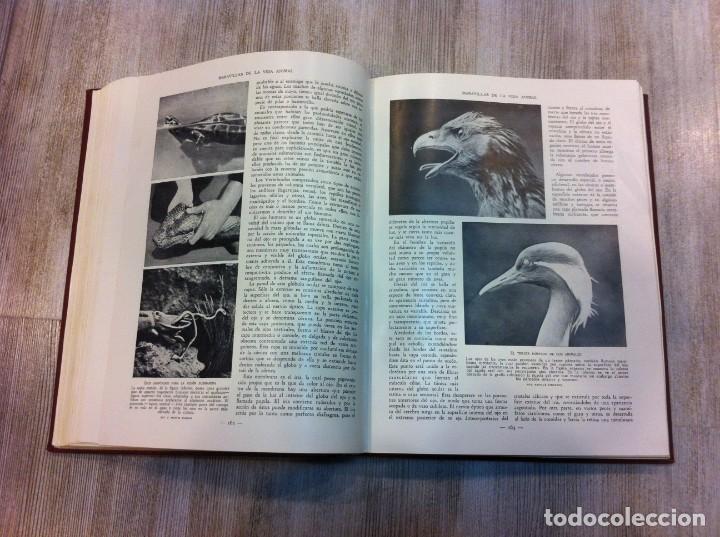 Libros antiguos: MARAVILLAS DE LA VIDA ANIMAL (4 TOMOS) J.A. HAMMERTON. Ed. JOAQUÍN GIL, 1930. BARCELONA. - Foto 4 - 142953930