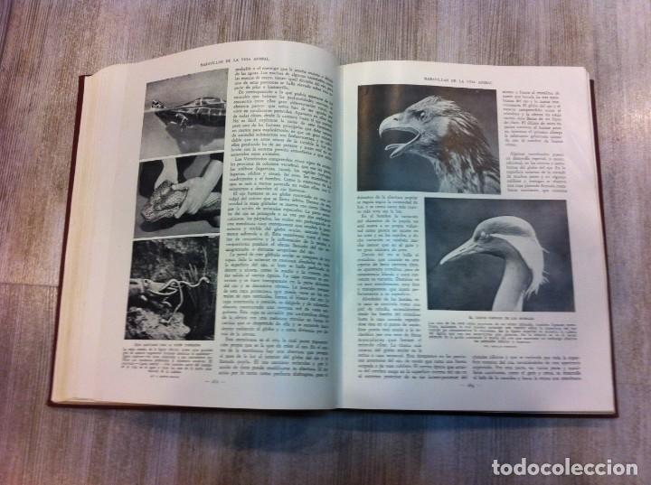 Libros antiguos: MARAVILLAS DE LA VIDA ANIMAL (4 TOMOS) J.A. HAMMERTON. Ed. JOAQUÍN GIL, 1930. BARCELONA. - Foto 5 - 142953930