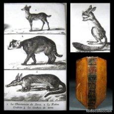 Libros antiguos: AÑO 1787 CUADRÚPEDOS BUFFON HISTORIA NATURAL 9 GRABADOS MARMOTA FOCA ZARIGÜEYA ZOOLOGÍA ANIMALES T11. Lote 106601179