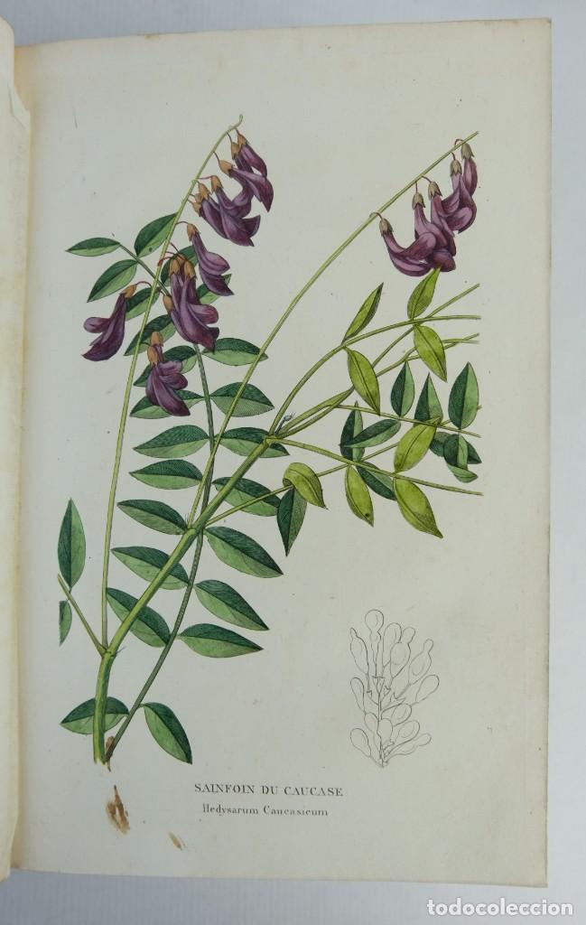 Libros antiguos: Annales de flore et de Pomone ou journal des jardins 1833-1841.Ed.Bousselon, Paris-9 tomos - Foto 9 - 143626202