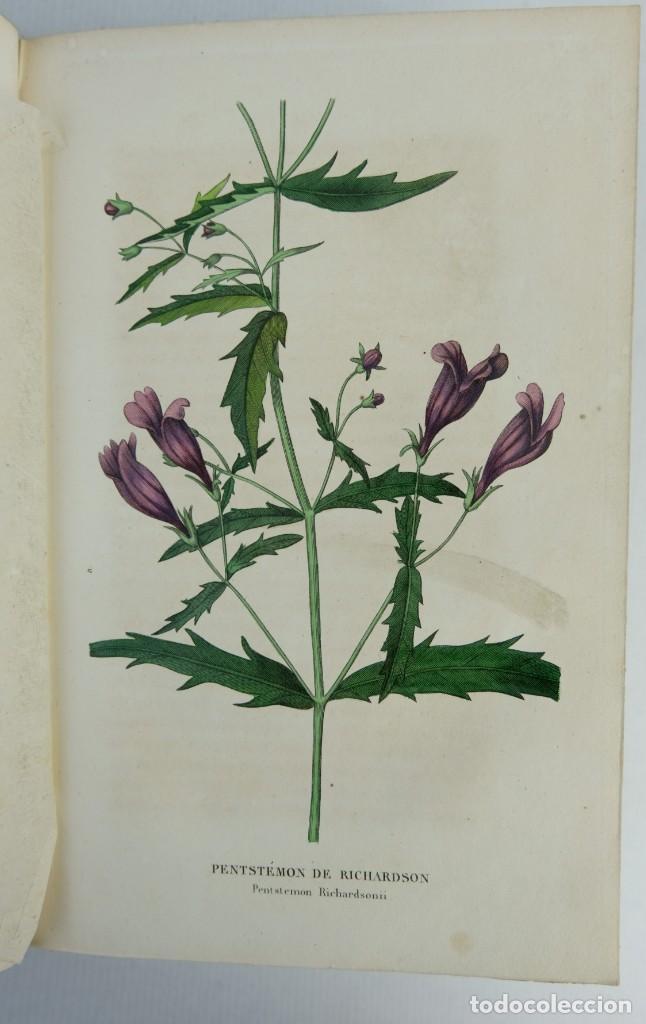 Libros antiguos: Annales de flore et de Pomone ou journal des jardins 1833-1841.Ed.Bousselon, Paris-9 tomos - Foto 10 - 143626202