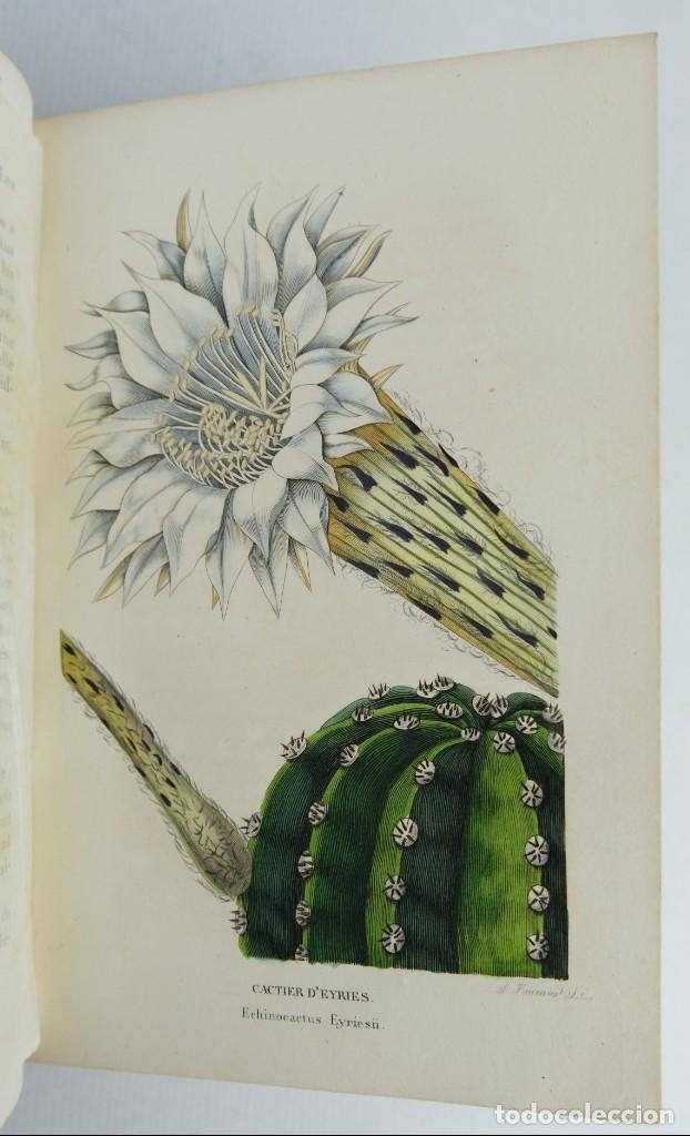 Libros antiguos: Annales de flore et de Pomone ou journal des jardins 1833-1841.Ed.Bousselon, Paris-9 tomos - Foto 11 - 143626202
