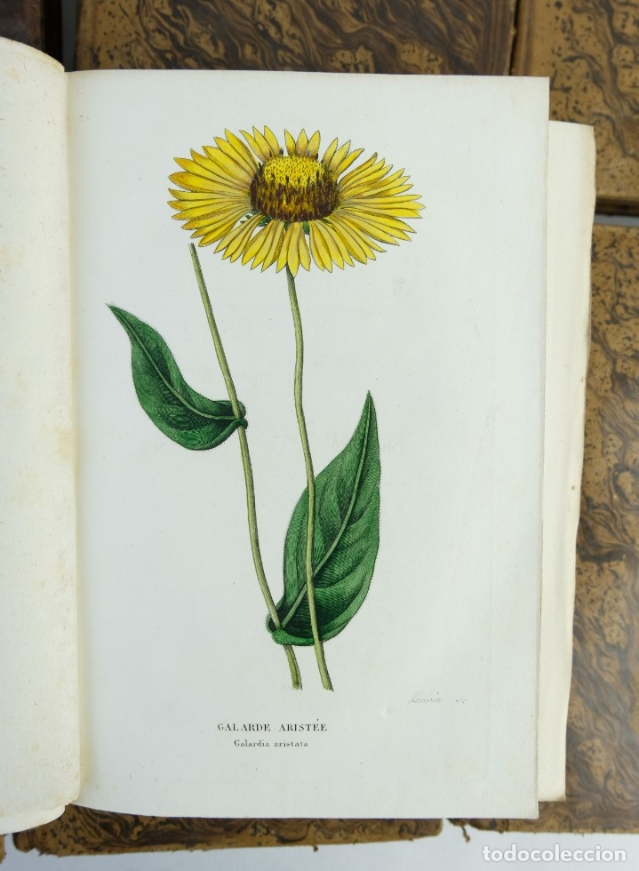 Libros antiguos: Annales de flore et de Pomone ou journal des jardins 1833-1841.Ed.Bousselon, Paris-9 tomos - Foto 12 - 143626202