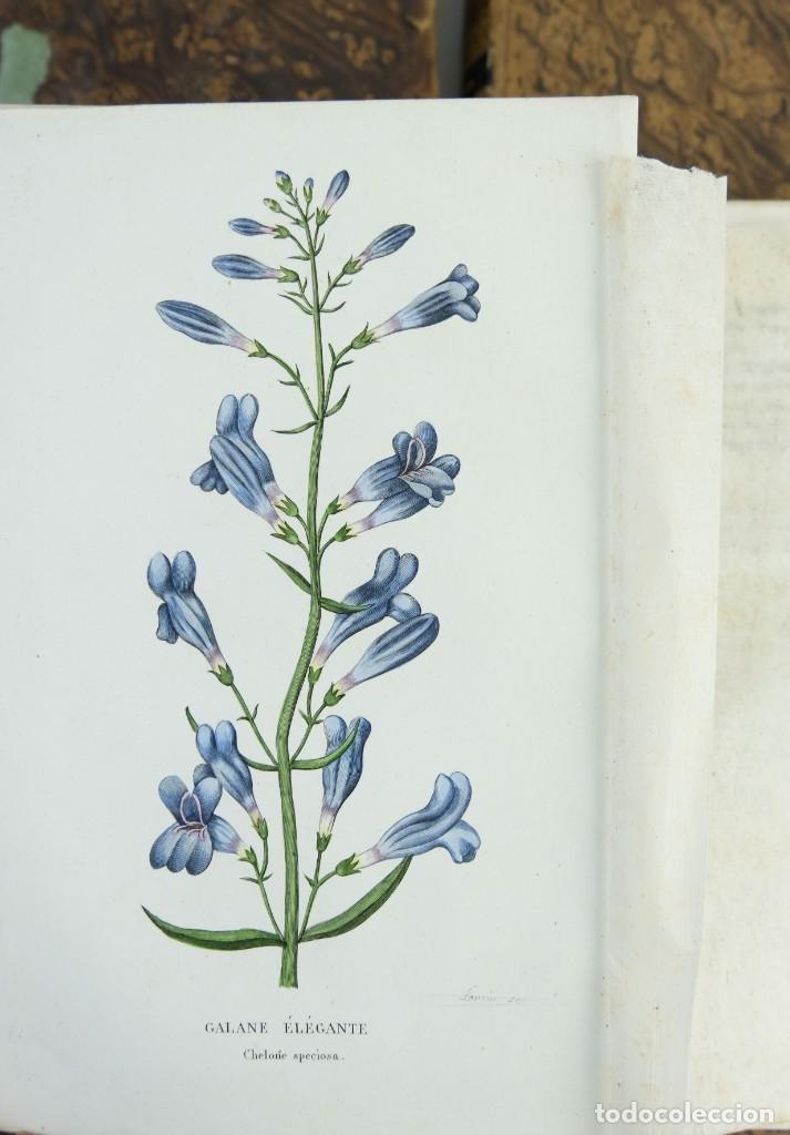 Libros antiguos: Annales de flore et de Pomone ou journal des jardins 1833-1841.Ed.Bousselon, Paris-9 tomos - Foto 13 - 143626202
