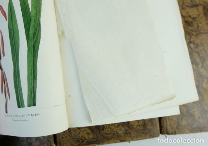 Libros antiguos: Annales de flore et de Pomone ou journal des jardins 1833-1841.Ed.Bousselon, Paris-9 tomos - Foto 14 - 143626202