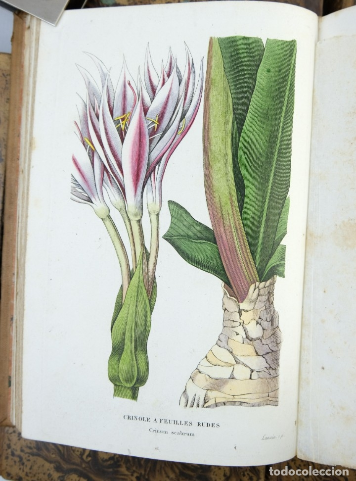 Libros antiguos: Annales de flore et de Pomone ou journal des jardins 1833-1841.Ed.Bousselon, Paris-9 tomos - Foto 15 - 143626202