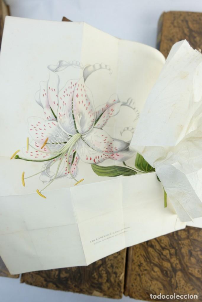 Libros antiguos: Annales de flore et de Pomone ou journal des jardins 1833-1841.Ed.Bousselon, Paris-9 tomos - Foto 16 - 143626202