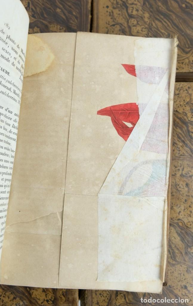 Libros antiguos: Annales de flore et de Pomone ou journal des jardins 1833-1841.Ed.Bousselon, Paris-9 tomos - Foto 17 - 143626202
