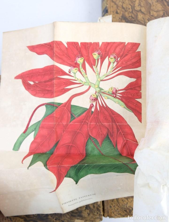 Libros antiguos: Annales de flore et de Pomone ou journal des jardins 1833-1841.Ed.Bousselon, Paris-9 tomos - Foto 18 - 143626202