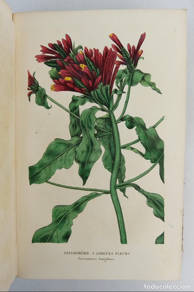 Libros antiguos: Annales de flore et de Pomone ou journal des jardins 1833-1841.Ed.Bousselon, Paris-9 tomos - Foto 8 - 143626202