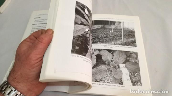 Libros antiguos: LA BORRAJA CULTIVO FENOLOGÍA SELECCIÓN PARA RESISTENCIA SUBIDA FLOR -AGRICULTURA GANADERÍA ARAGON - Foto 12 - 195354396