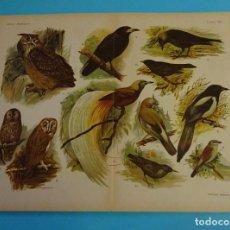 Libros antiguos: 20 CROMOLITOGRAFÍAS DEL LIBRO EL MUNDO DE LOS ANIMALES - EDITORIAL ARALUCE - 1920 - 30. Lote 145927934