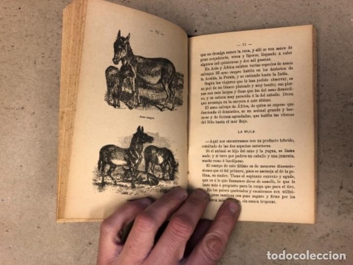 Libros antiguos: PRINCIPIOS DE ZOOTECNIA (CRIANZA DE LOS ANIMALES RELACIONADOS CON LA AGRICULTURA). JUAN RUIZ Y TARTA - Foto 6 - 146540730