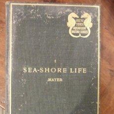 Libros antiguos: SEA-SHORE LIFE THE INVERTEBRATES NEW YORK - ALFRED GOLDSBOROUGH MAYER - ZOOLOGICAL SOCIETY 1905. Lote 147528558