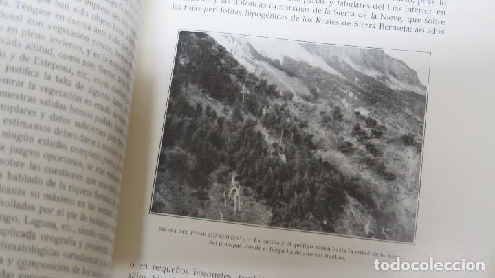 Libros antiguos: 1928.- SERVICIO FORESTAL DE INVESTIGACIONES Y EXPERIENCIAS. AÑO I. Nº1 - Foto 6 - 147598050