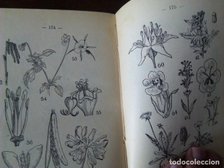 Alte Bücher: Sistemática Vegetal. A. Caballero. 1932. - Foto 5 - 147630338