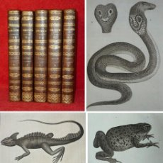Libros antiguos: AÑO 1802 - BUFFON - REPTILES - 5 TOMOS - 59 LAMINAS CON GRABADOS - HISTORIA NATURAL. Lote 148035974