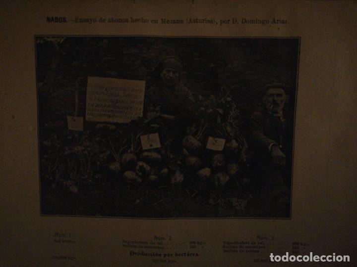 Libros antiguos: La Aplicación de los Abonos. Biblioteca Agronómica Popular - Foto 17 - 149548494