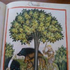 Libros antiguos: TACUINUM SANITATIS DE CERRUTI, ED CASARIEGO 1996, CODEX VINDOBONENSIS, FRANZ UNTERKIRCHER. Lote 149667950