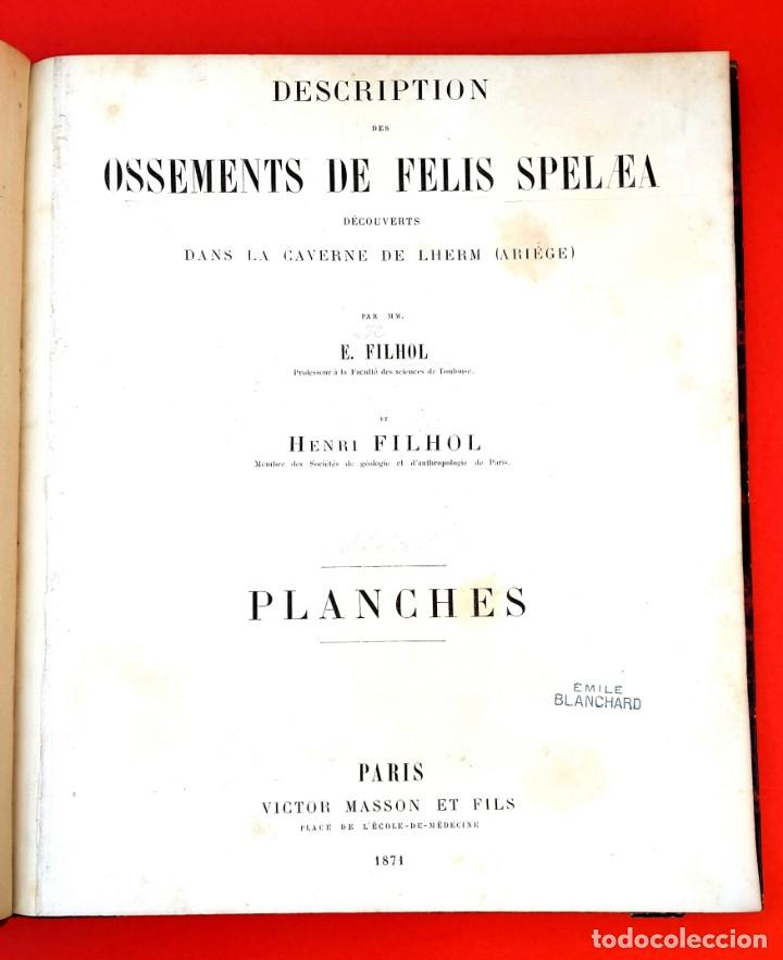 Libros antiguos: PALEONTOLOGÍA - 1871 - DESCRIPTION OSSEMENTS DE FELIS SPELAEA - PLANCHES - HENRI FILHOL - Foto 3 - 150838514