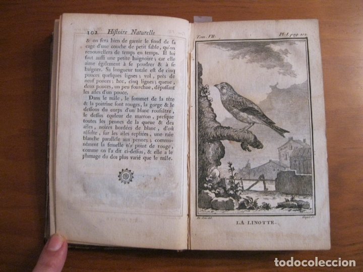 Libros antiguos: Histoire Naturelle, générale et particuliere, Tomo VII, 1779. Buffon. Con numerosos grabados - Foto 3 - 153434185