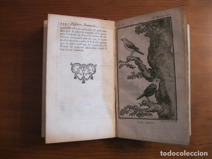 Libros antiguos: Histoire Naturelle, générale et particuliere, Tomo VII, 1779. Buffon. Con numerosos grabados - Foto 9 - 153434185