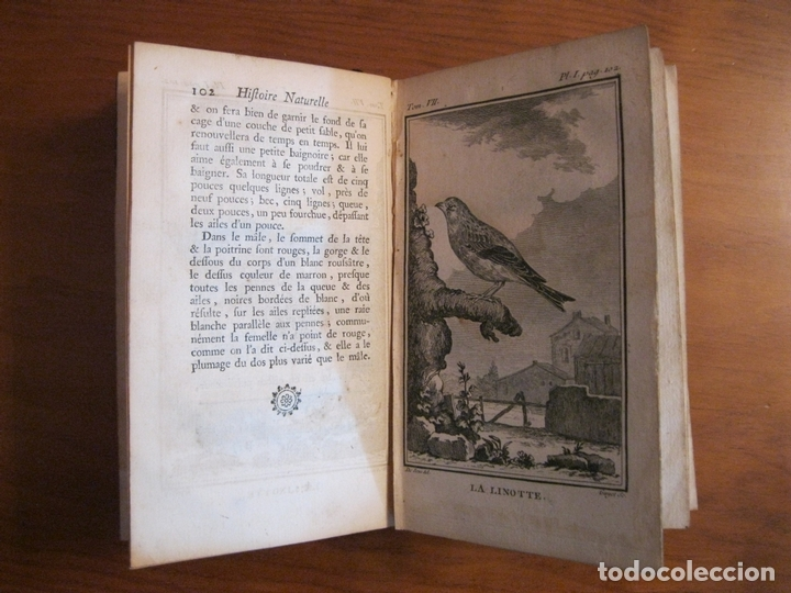 Libros antiguos: Histoire Naturelle, générale et particuliere, Tomo VII, 1779. Buffon. Con numerosos grabados - Foto 11 - 153434185