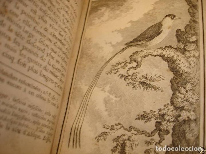 Libros antiguos: Histoire Naturelle, générale et particuliere, Tomo VII, 1779. Buffon. Con numerosos grabados - Foto 20 - 153434185