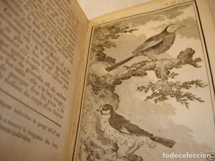 Libros antiguos: Histoire Naturelle, générale et particuliere, Tomo VII, 1779. Buffon. Con numerosos grabados - Foto 21 - 153434185