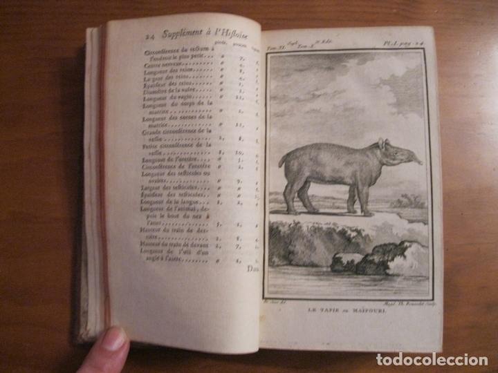 Libros antiguos: Suplemet a l histoire naturelle Tomo XI, 1782. Buffon. Posee grabados - Foto 4 - 153740322