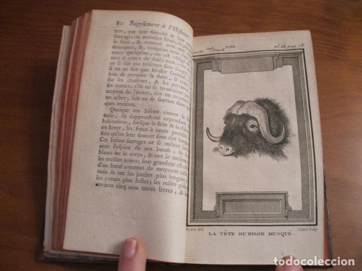 Libros antiguos: Suplemet a l histoire naturelle Tomo XI, 1782. Buffon. Posee grabados - Foto 6 - 153740322