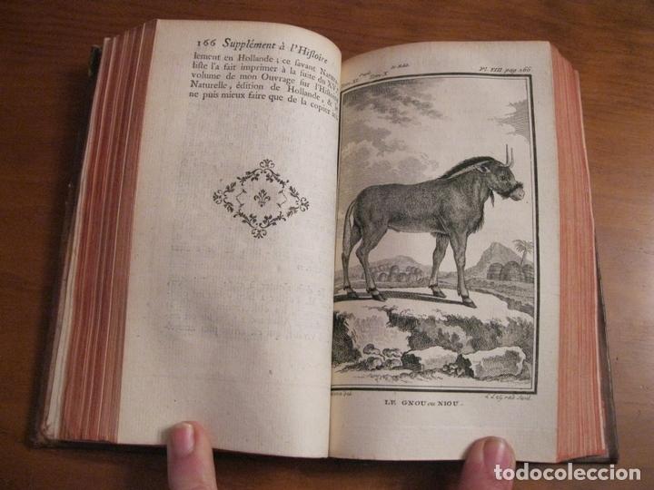 Libros antiguos: Suplemet a l histoire naturelle Tomo XI, 1782. Buffon. Posee grabados - Foto 7 - 153740322
